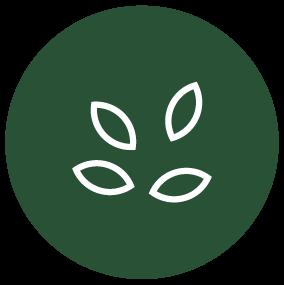 semente de chia